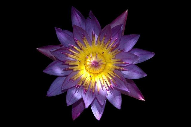 Những loài hoa nở đêm đẹp nhất hành tinh