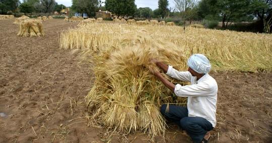 Ấn Độ: 25.000 nông dân đòi tự tử tập thể vào ngày quốc khánh