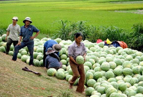 Hợp tác xã đổi đời nông dân