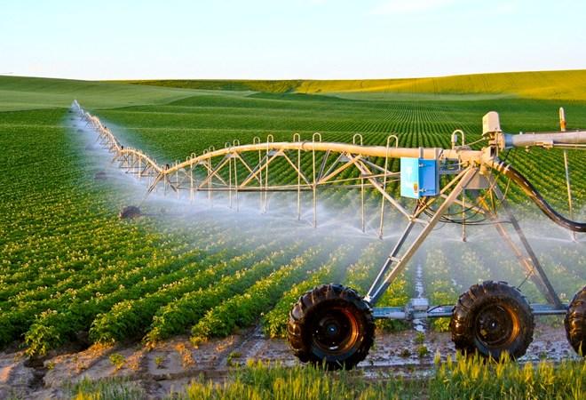 Israel - điểm sáng nông nghiệp trên sa mạc