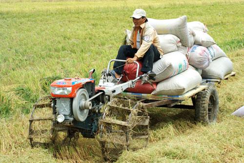 ADB: Nông nghiệp kéo lùi tăng trưởng kinh tế Việt Nam