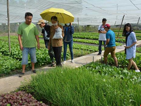 khach hang tham quan trang trai rau qua huu co organica.