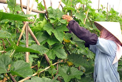 Vì sao nông nghiệp tăng trưởng âm?