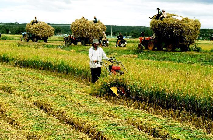 Nông nghiệp thiệt hại 17.000 tỷ đồng, sốt ruột nhiều mối đe dọa tăng trưởng