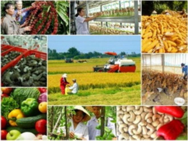 Tái cơ cấu nông nghiệp: Thị trường - động lực sản xuất