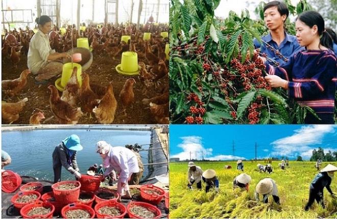 Nhìn lại một năm nhiều biến động của nền nông nghiệp Việt Nam