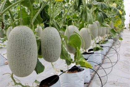 Vì sao dòng vốn 135.000 tỷ đăng ký rót vào nông nghiệp công nghệ cao chưa chảy?