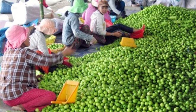 Nông sản Việt: Bao giờ hết bị động trước thị trường Trung Quốc?