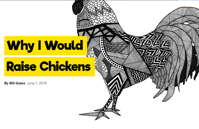 Bill Gates dạy cách làm giàu với 2 USD và ... một con gà
