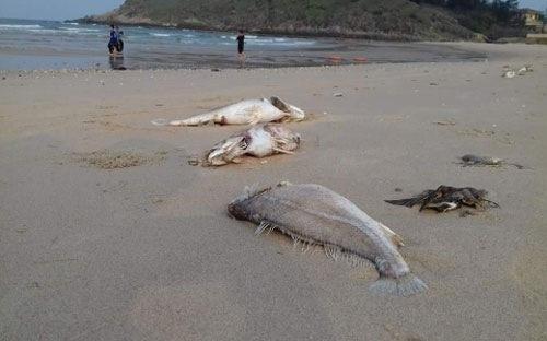 Chính phủ: 100.000 người bị ảnh hưởng trực tiếp vụ ô nhiễm biển
