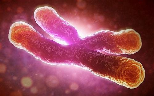 telomere duoc ky vong se la chia khoa mo canh cua cai lao hoan dong cho con nguoi trong tuong lai. anh:telegraph