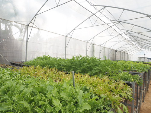 Trang trại rau sạch mini tiền tỷ giữa Sài Gòn