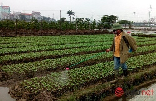 Phun hơn 100 tấn thuốc sâu TQ vào rau, hỏi sao người Việt không bị đầu độc?