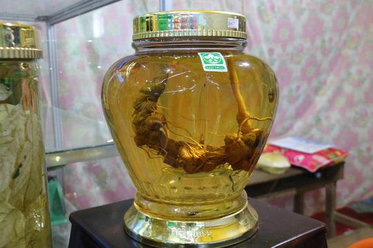 Sâm Ngọc Linh gần 100 triệu/kg vẫn đắt như tôm tươi - Ảnh 6.