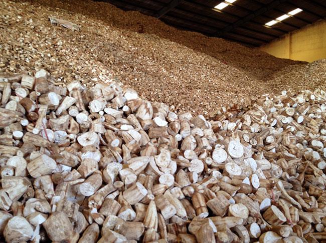 Xuất khẩu sắn, sản phẩm từ sắn giảm cả lượng và trị giá