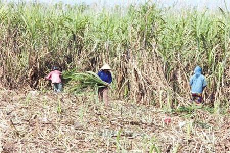 Sản xuất giống: 'Tử huyệt' của ngành nông nghiệp