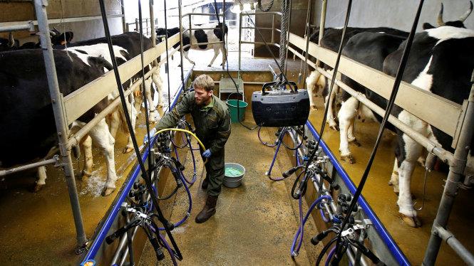 Tòa công lý châu Âu tuyên sữa đậu nành không phải là sữa