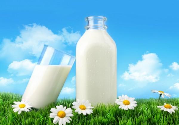 Nhập khẩu sữa và sản phẩm kim ngạch tăng trở lại