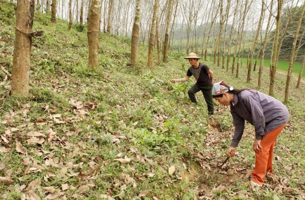 Tái cơ cấu doanh nghiệp nông nghiệp vẫn chồng chất khó khăn