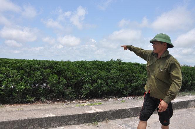 Lại xin phá rừng làm công nghiệp