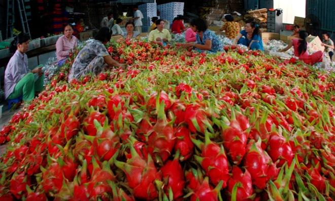 Đài Loan mở cửa trở lại với thanh long Việt Nam
