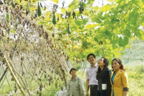 Thoát nghèo bền vững ở Đà Nẵng