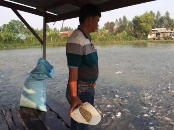 ao nuoi ca cua ho dan theo chuoi lien ket tai an giang. (anh: pv/vietnam+)