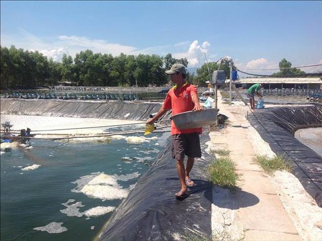 """""""Điểm danh"""" 139 doanh nghiệp thủy sản bị thu hồi sản phẩm"""