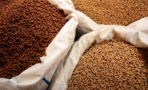 Nhập khẩu thức ăn chăn nuôi và nguyên liệu Việt Nam tháng 1/2019 tăng 10,26%