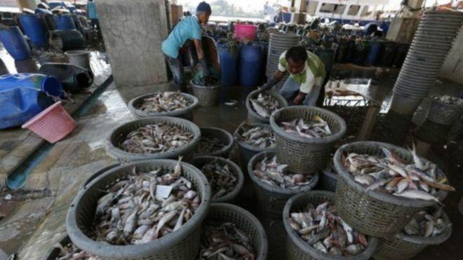 Ngành thủy sản Thái Lan liệu có phải nhận thẻ đỏ từ EU