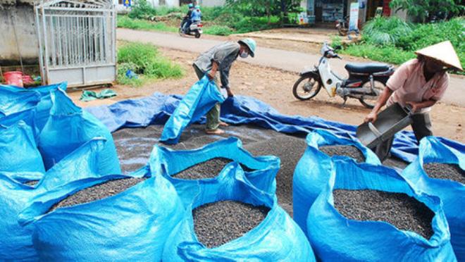 Nhà nhập khẩu cảnh báo chất lượng tiêu Việt Nam