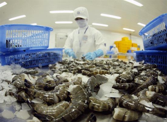 Xuất khẩu tôm sang Trung Quốc tăng mạnh