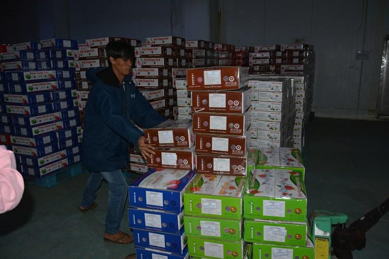 Trái cây 'nếm mật, nằm gai' mang về tỉ đô cho Việt Nam