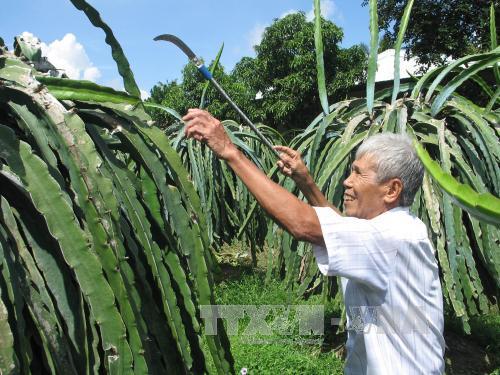 Sản xuất nông nghiệp hữu cơ đang thu hút nhiều nhà nông