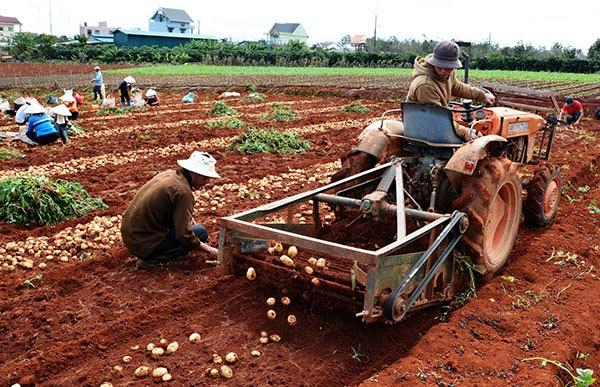 Bản tin Video - Tin Kinh tế nông nghiệp 15-09-2017: Làng hoa Sa Đéc vào vụ