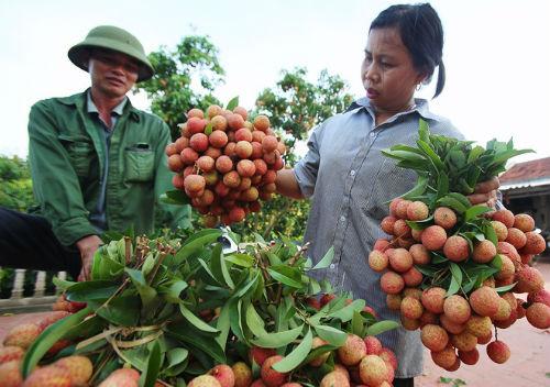 Nông nghiệp Việt Nam tăng trưởng âm