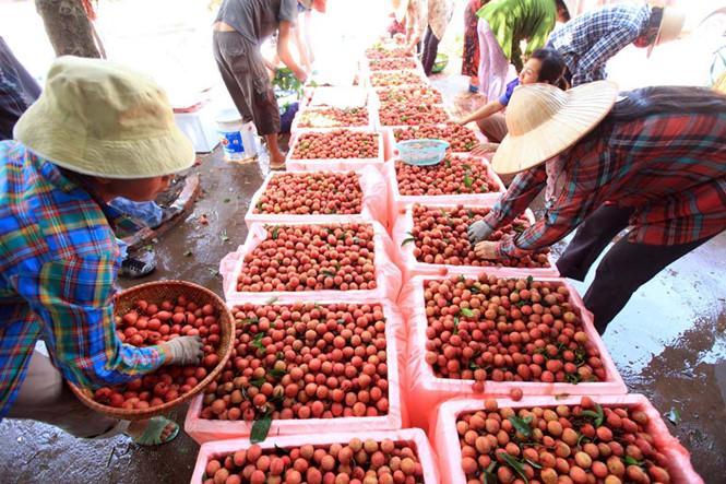 Nghị quyết trung ương 5: Xây dựng ngành công nghiệp chế biến nông sản