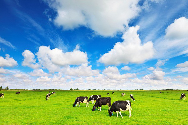 Tháng 2/2019 kim ngạch nhập khẩu sữa và sản phẩm tăng trở lại