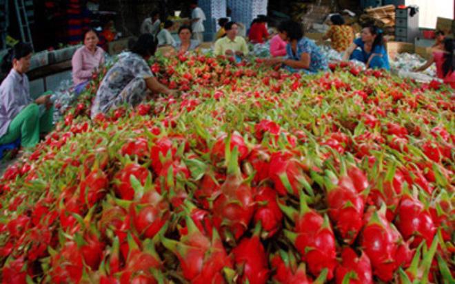 Cơ hội cho xuất khẩu rau quả năm 2016