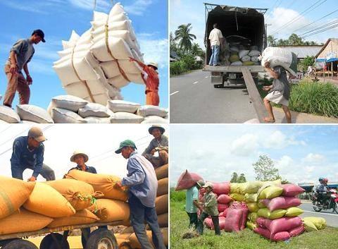 Thị trường xuất khẩu gạo 4 tháng đầu năm 2016
