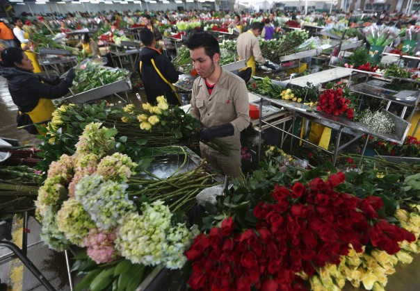 Một số thông tin cần biết khi xuất khẩu hoa vào thị trường EU