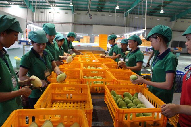 Kim ngạch xuất khẩu nông lâm thuỷ sản đạt hơn 15 tỷ USD trong 6 tháng