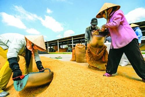 Xuất khẩu nông sản đối mặt thách thức
