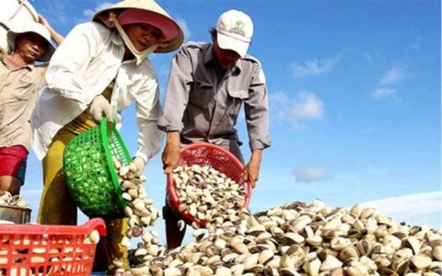 Xuất khẩu nhuyễn thể hai mảnh vỏ dịch chuyển từ EU sang Trung Quốc