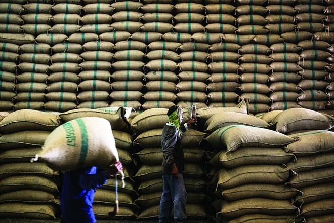 """Ấn Độ """"soán ngôi"""" Thái, Việt Nam xếp thứ 3 xuất khẩu gạo"""